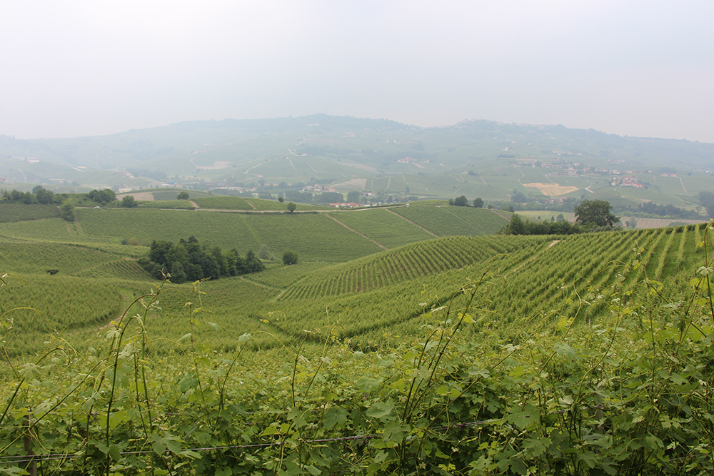 A view from atop Bricco Boschis.  The first hill downslope is the backside of the three vineyards.  Vignolo is just on the other side.